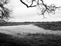 Substitutive wetland